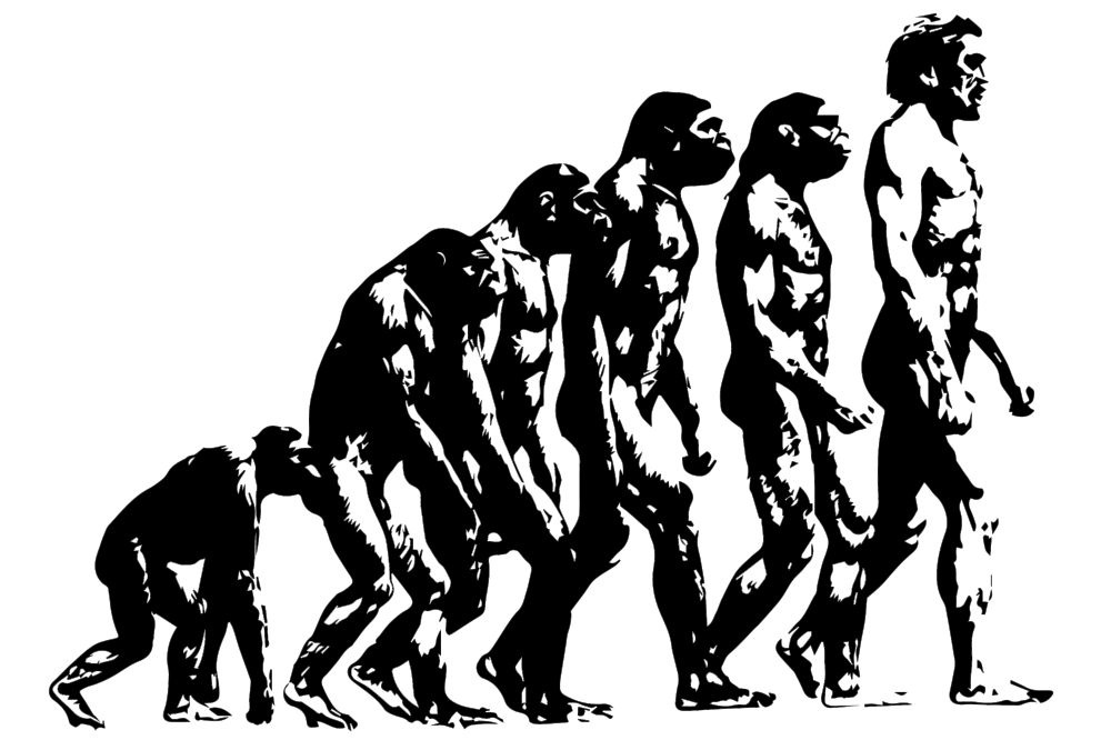 Evolution ape to man